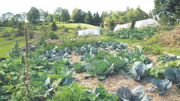 Mulch, eine Bodendeckung aus Stroh und Gras, schützt den Boden vor dem Austrocknen, hält warm und gibt wichtige Nährstoffe ab.