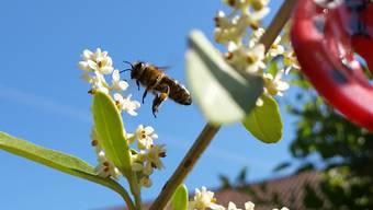 """Bienenflug im Juni"" (Muttenz - 01.Juni2020)"