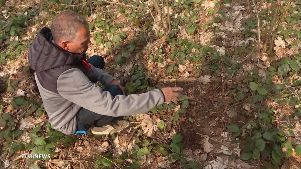 Aprilscherz: Doch kein Bär auf dem Uetliberg