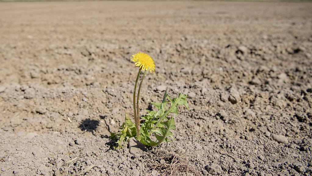 Phasen mit grosser Trockenheit gehören zu den erwarteten Folgen der Klimaveränderung. Darauf will sich der Kanton St. Gallen vorbereiten. (Symbolbild)