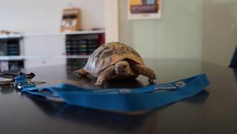 Schildkrötenbesitzer gesucht in Zürich, Kreis 2 (2.4.2019)