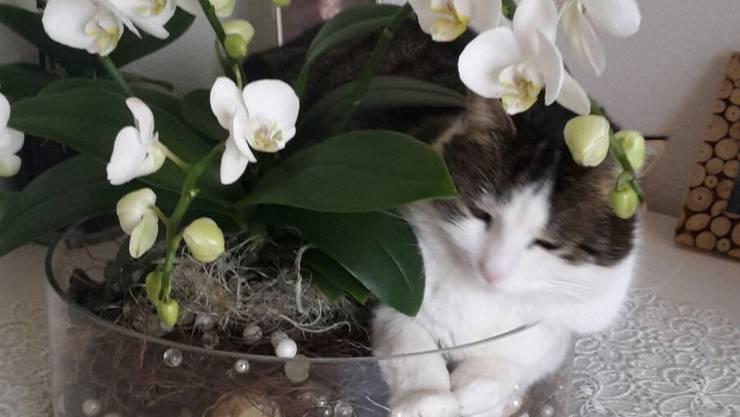 Nicht nur Orchideen blühen im Frühling...!