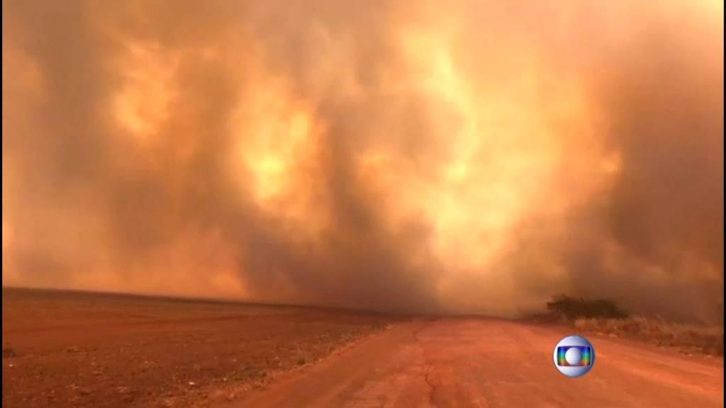 Inferno Amazonas: Brände zerstören Lunge der Erde