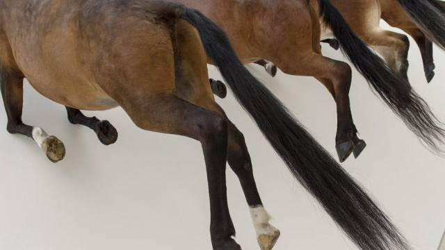 Die aufsehenerregenden Pferde von Cattelan