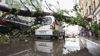 Ein umgewehter Baum liegt nach dem Sturm in Moskau auf einem Auto.