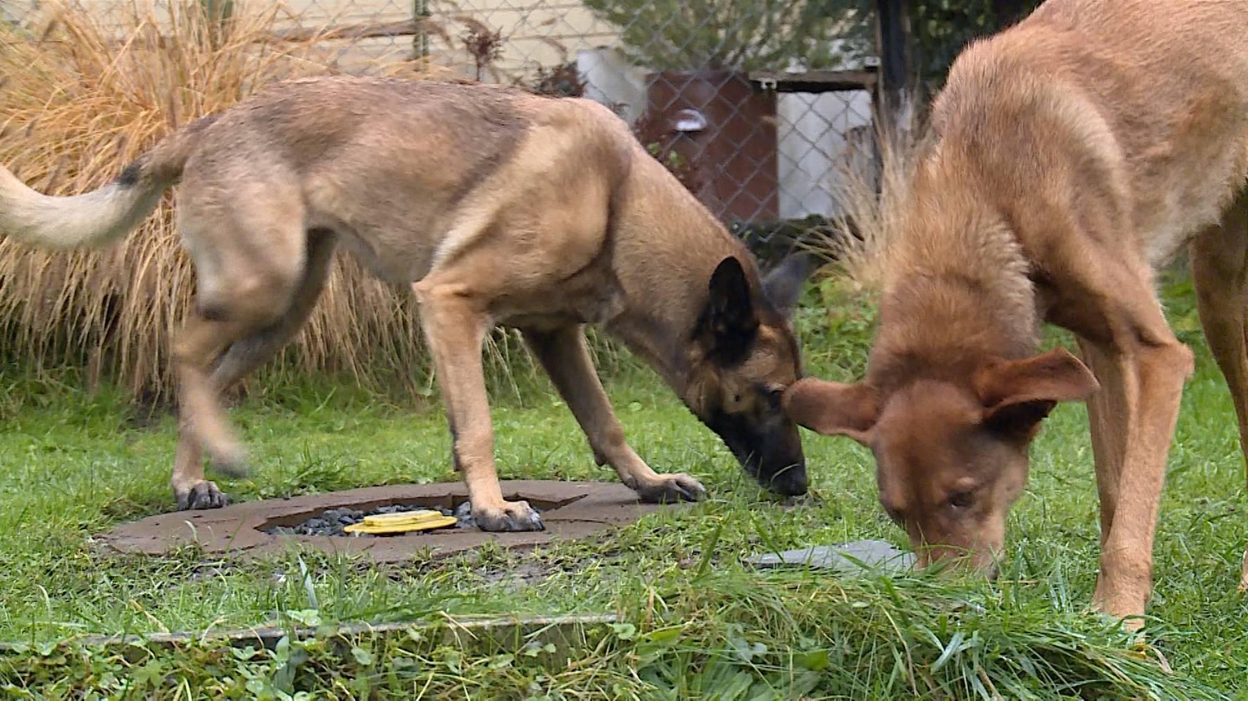 Zwischenstopp für Hunde