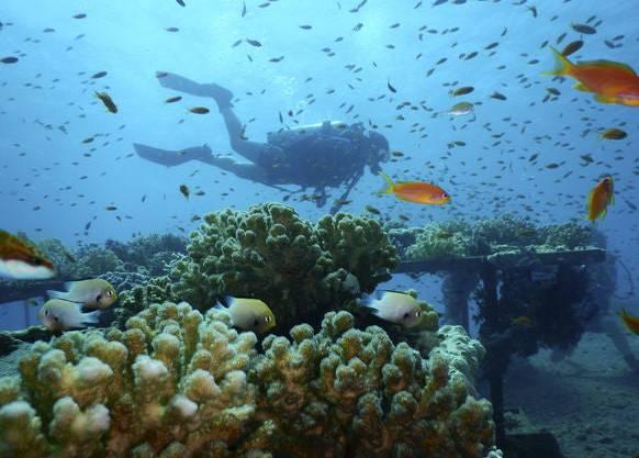 Viele Menschen fliegen ans Rote Meer, um die Korallenriffe zu sehen, bevor sie durch den Klimawandel verschwinden.