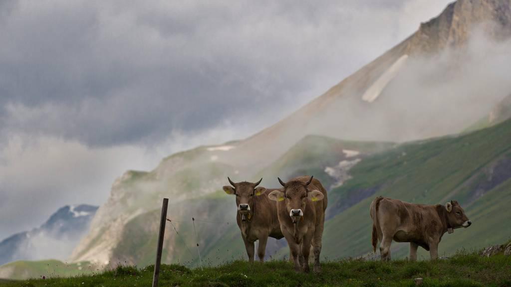 Viele Deutsche zieht es im Sommer auf eine Schweizer Alp