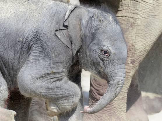 Das Elefantenmädchen erhält den Namen Omysha