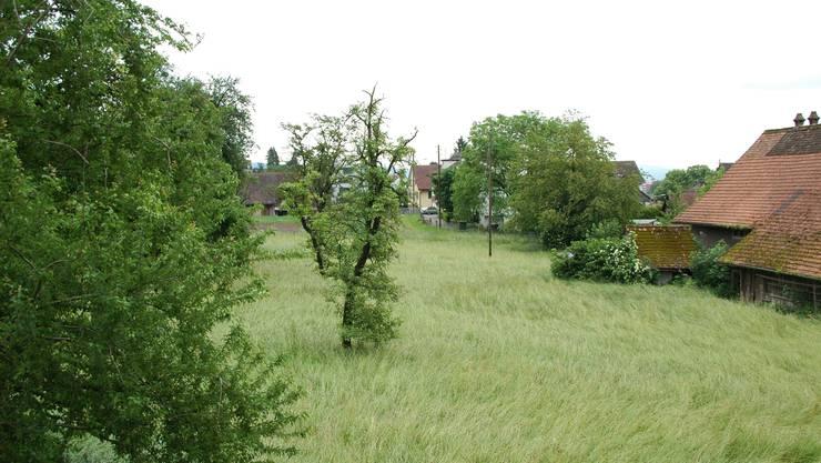 Grünzone Auf der «Stolzwies» sind Neubauten geplant, das unter kommunalem Schutz stehende Bauernhaus (r.) soll saniert werden. (Bild: dvk)