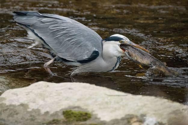 Auch in der Tierwelt gibt es Individuen mit einer zu grossen Klappe.