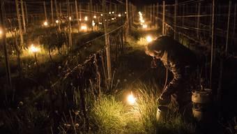 Mit Frostkerzen haben Weinbauern versucht, die Schäden der April-Frostnächte in Grenzen zu halten. (Archivbild)
