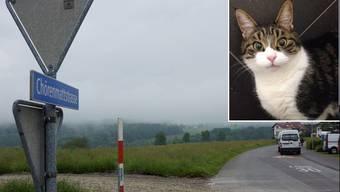 Sieben der zehn vermissten Katzen in Berikon stammen aus dem Chörenmattquartier. Crusoe ist eine von ihnen.