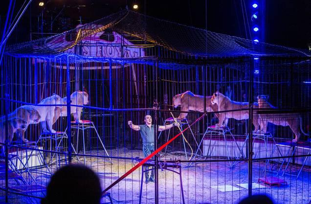 Die Löwennummer des Circus Royal war umstritten.