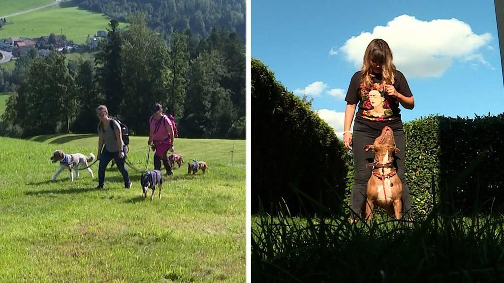 Jakobsweg mit Hunden / Happy End für «Pasa»