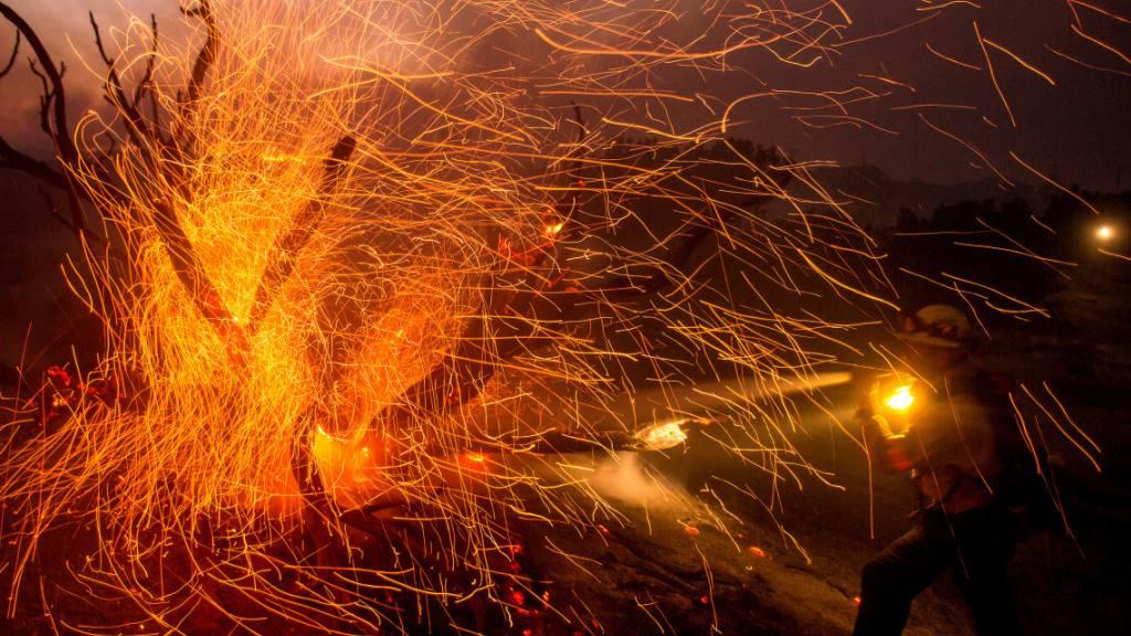 Der Wind weht die Glut von den Bäumen, während ein Feuerwehrmann gegen das Bobcat-Feuer kämpft. Foto: Ringo Chiu/ZUMA Wire/dpa