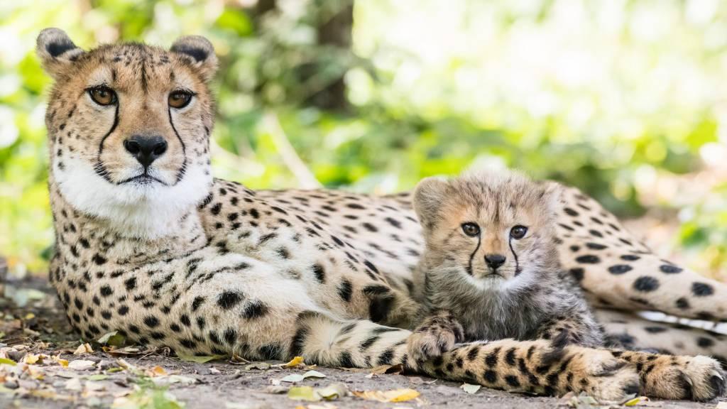 Zoo Basel ab sofort geschlossen!