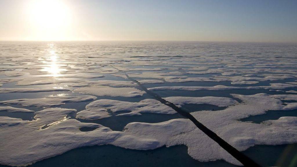 Unterschiedliche Quecksilber-Belastung arktischer Fische