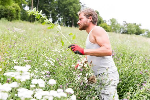 Auch Projektleiter Michele Bühler vom Naturnetz kämpft sich durch das hoche Gras.