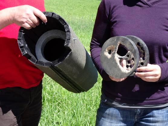 Der Nistkasten für die Steinkäuze sind so schmal gehalten, dass Marder nicht an die Eier gelangen. Am Deckel (rechts) sind bereits Verbissspuren eines Marders.