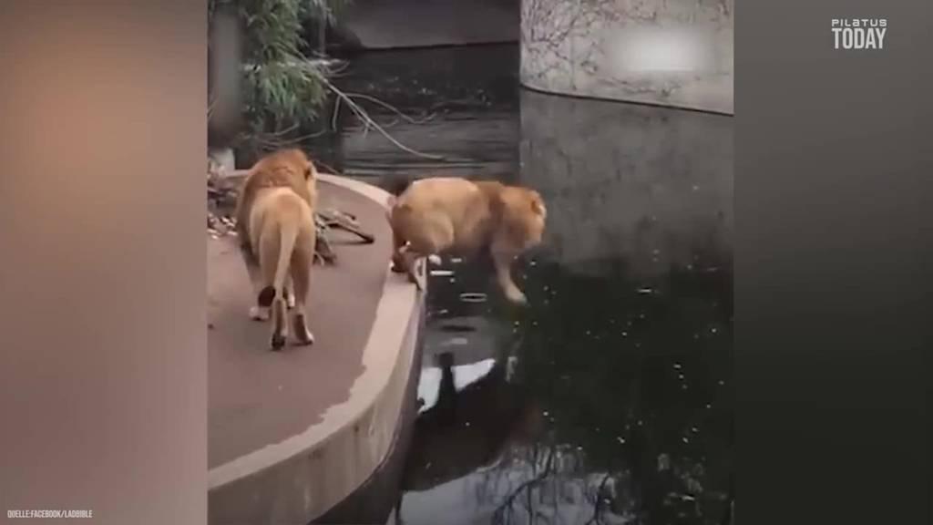Wenn Tiere einen schlechten Tag haben