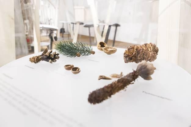 Samen und Nüsse - die Nahrung der Eichhörnchen