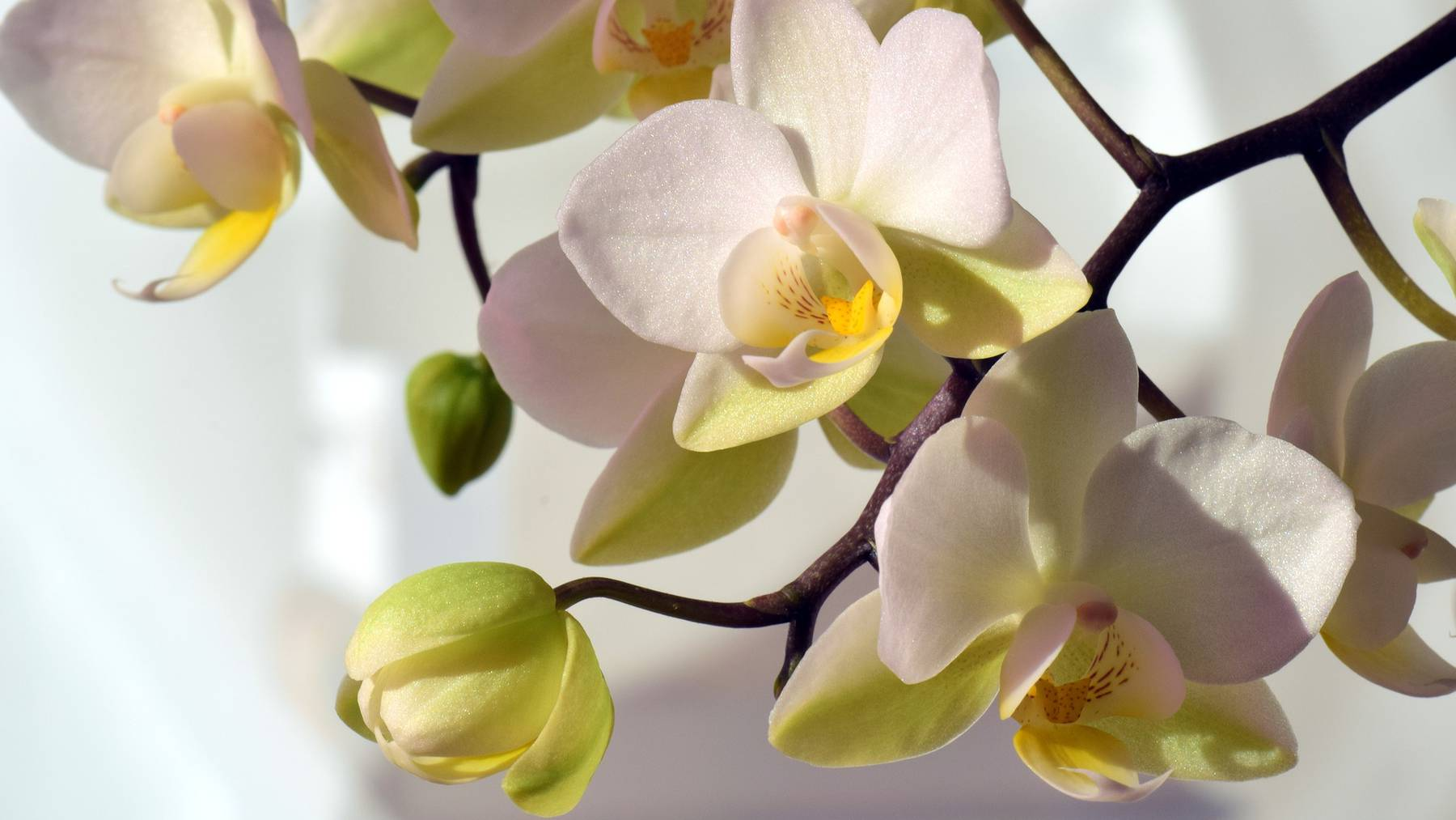 orchid-2181044_1920