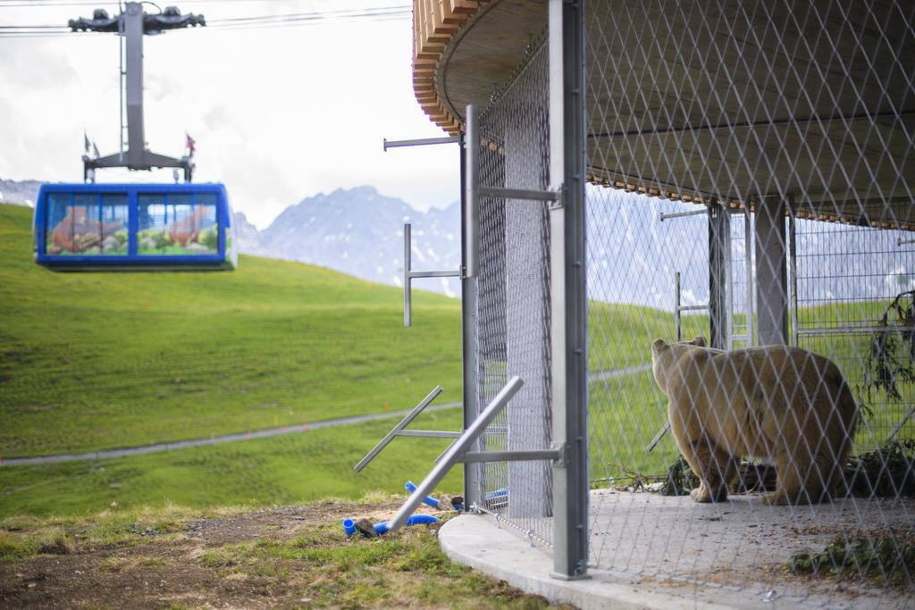 Napa kommt nach Arosa (© Keystone/Gian Ehrenzeller)