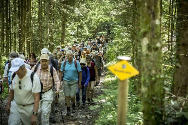 Im kühlen Ruedertaler Wald.