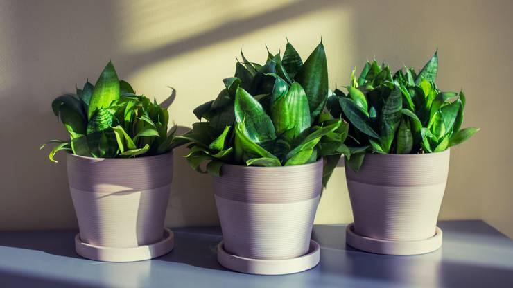 pflanzen f r ein besseres raumklima wohnen leben und stil sponsored by akb dossier az. Black Bedroom Furniture Sets. Home Design Ideas