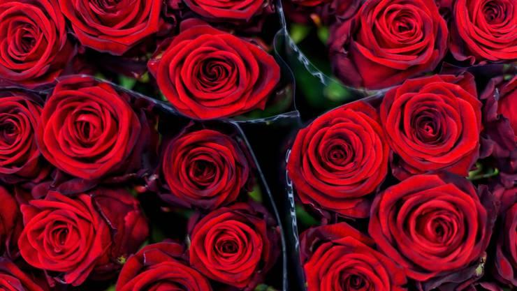 Rote Rosen, der Klassiker