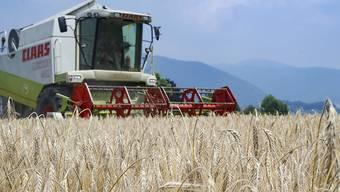 Die Bauern brauchen den Rotstift nicht zu fürchten. Geht es nach dem Nationalrat, bekommen sie in den nächsten Jahren gleich viel Geld wie heute. (Archivbild)