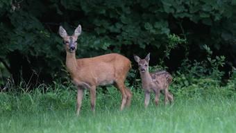 Solothurner Jäger bescherten den Liebhabern 2019 wieder viel Rehwild. (Symbolbild)