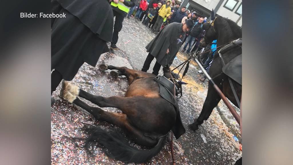 Pferde-Zwischenfall an Basler Fasnacht verärgert Tierschützer