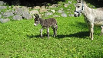 Jungtiere im Tierpark Weihermätteli