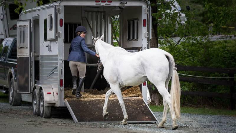26-jährige Reiterin gerät unter eigenes Pferd und stirbt