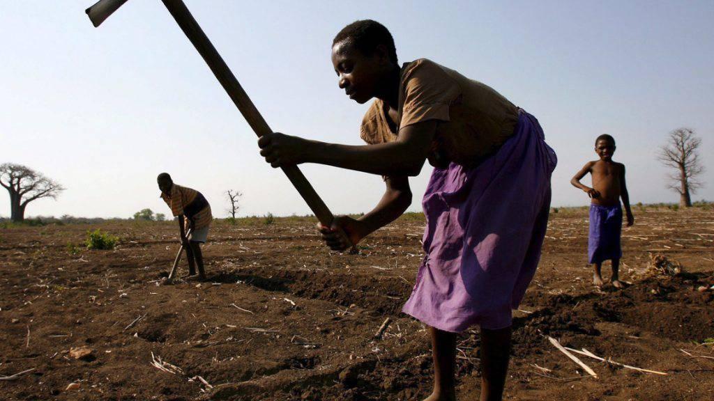 Der Verlust von Phosphor in den Böden Afrikas ist besonders hoch - für die Landwirtschaft ist dieses Element jedoch unentbehrlich.