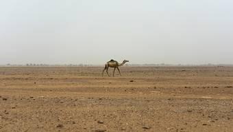 In der Sahara dauert es mehrere tausend Jahre bis sich das Regenwasser in tieferen Erdschichten als Grundwasser ansammelt. (Symbolbild)