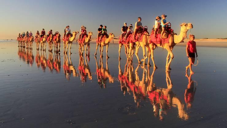 Karawane in den Sonnenuntergang – eine der Attraktionen in Broome an der Westküste ist der Kamelritt am Strand