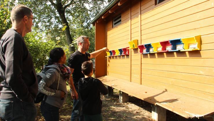 Marc Müller, Vizepräsident des Imkervereins Muri und Umgebung, zeigt einer Familie, wie die Bienen vor den Eingängen ihrer Stöcke tanzen.