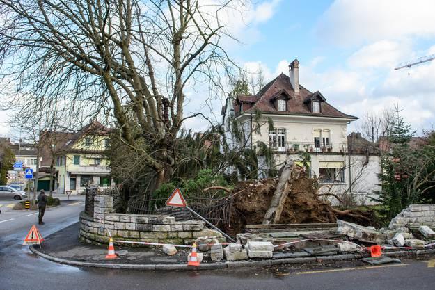 Der Wintersturm «Burglind» führt in der Region Basel unter anderem zu Störungen im öffentlichen Verkehr. In Laufen an der Röschenzerstrasse fiel ein grosser Baum genau neben ein Haus. Dabei beschädigten die Wurzeln das angrenzende Trottoir und die Mauer des Grundstücks