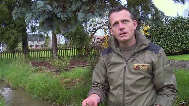 Hunderte tote Krebse in Wichtrach