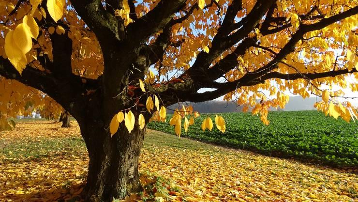 Herbstimmung im Oedenholz