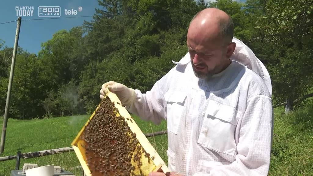 Mieses Wetter macht Honig-Ernte zunichte