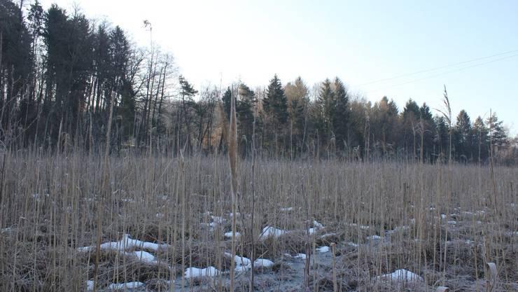 Das Chlepfibeerimoos im Winter