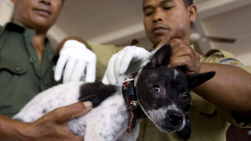 In mehreren asiatischen Ländern wie etwa Indonesien werden Hunde gegen Tollwut geimpft. (Archivbild)