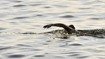 Penny Palfrey schwimmt