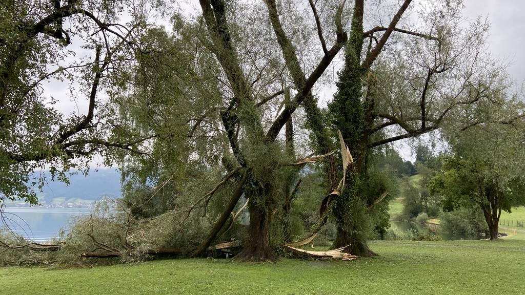 Verhagelte Ernte und geknickte Bäume: Das Aufräumen beginnt