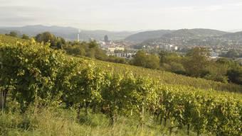 Anlässlich der Medienkonferenz des Landwirtschaftlichen Zenrums Ebenrain zum Thema Weinbau im Grenzgebiet findet eine Begehung des Riehemer Schlipf statt. Verschiedene Ansichten des Rebberg Schlipf am Tüllinger Hügel.