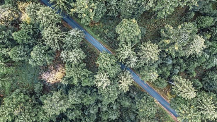 Trockenheit und steigende Temperaturen setzen gewissen Baumsorten immer mehr zu.
